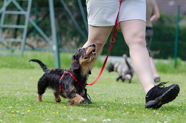 Different Types Of Dog Collars
