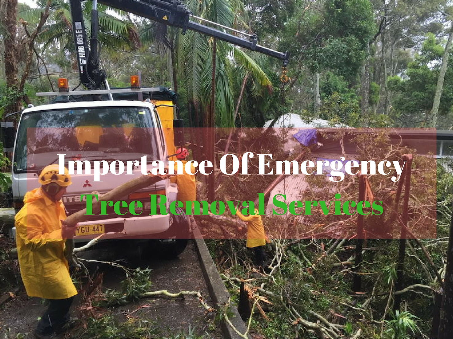 Importance Of Emergency Tree Removal Services
