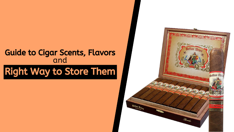Guide to Cigar Scents, Flavors, and Right Way to Store Them