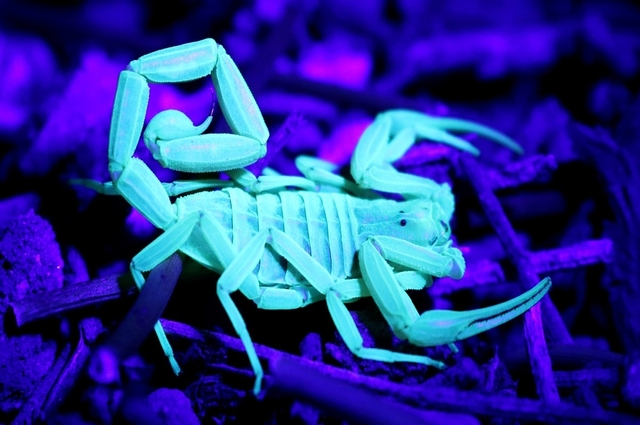 Eliminate Scorpions Safely With A Phoenix Pest Control Service