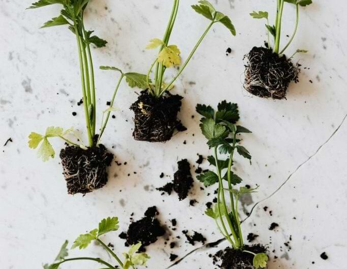 10 Practical Tips for Zero Waste Gardening